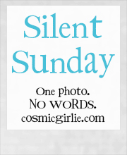Silent Sunday Silent Sunday 17th August 2014